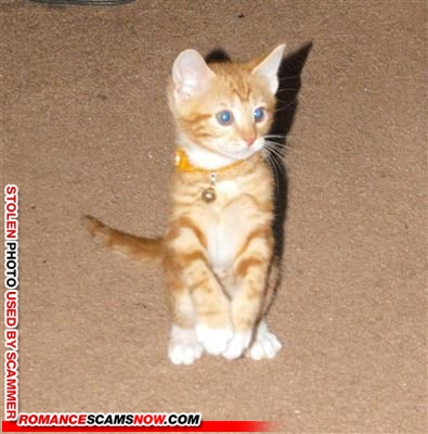 cynthia_fems101@yahoo.com - smart using a kitten!